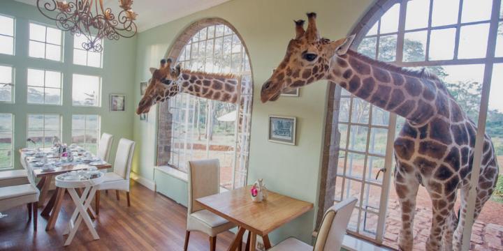 kenya giraffe manor